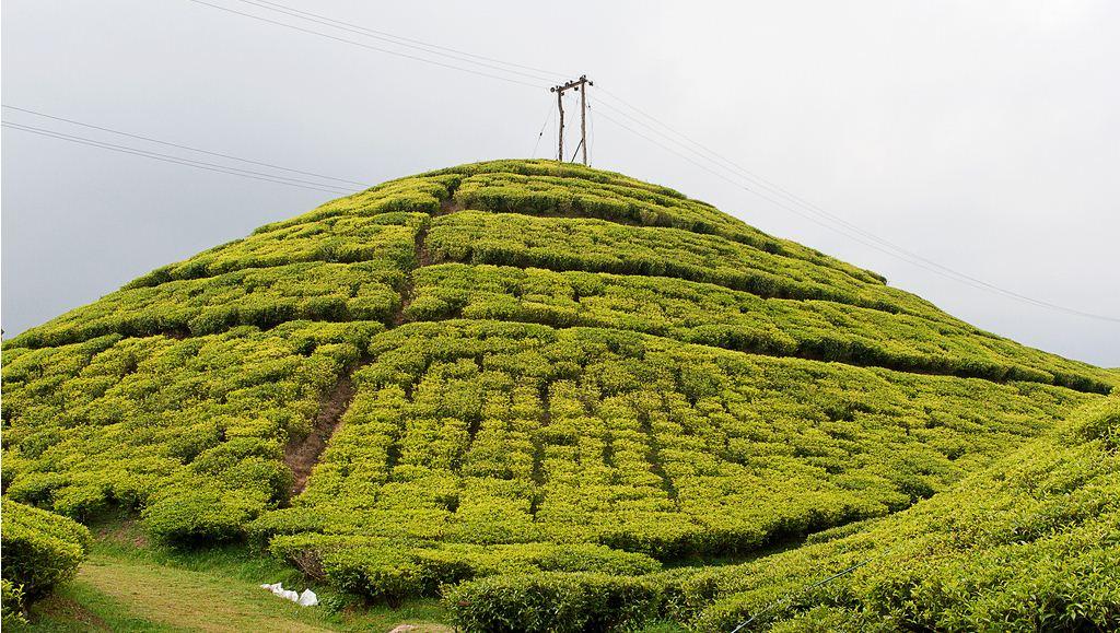Gopaldhara Tea Estate – Pinnacle of the Darjeeling Tea Horizon